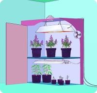 Эта  оранжерея,  размещенная  в  шкафу, имеет все необходимое для выращивания: освещение,  вентиляцию,  и  марихуану! Лампы высокой мощности — до 400 Ватт на площадь 90х120 см в комнате для цветения,  а  две  55-ваттные  лампы  дневного света в одном рефлекторе освещают материнские растения в непрерывном процессе выращивания