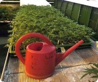 Лейка  хороша  для  небольших  садов  и в случае  применения  небольших  количеств удобрений