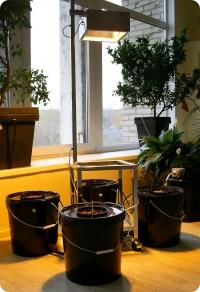 гидропонная система для выращивания наших The future abrupt pepper
